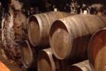 Pivnica - Malokarpatská vínna cesta